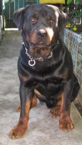 Bruno,06